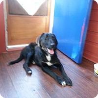 Adopt A Pet :: Coal - Saskatoon, SK