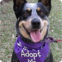 Adopt A Pet :: Chelsea - Siler City, NC