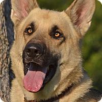 Adopt A Pet :: Dancer - Altadena, CA