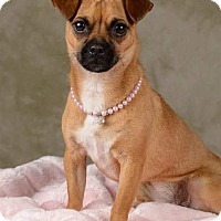 Adopt A Pet :: Lady - Henderson, NV