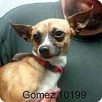 Adopt A Pet :: Gomez - Greencastle, NC