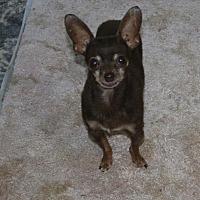 Adopt A Pet :: Armani - Walnut Creek, CA