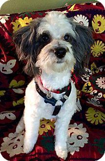 Terrier (Unknown Type, Medium) Mix Dog for adoption in Portland, Oregon - Houdini