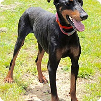 Adopt A Pet :: Meeka - Joplin, MO