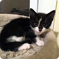 Adopt A Pet :: Levi - Toms River, NJ