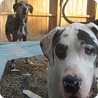 Adopt A Pet :: George - Baden, PA