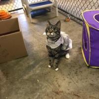 Adopt A Pet :: Noel - Greenville, NC