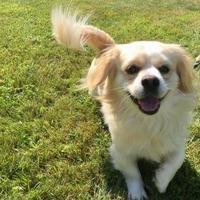 Adopt A Pet :: Glenn - Ossipee, NH