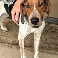 Adopt A Pet :: Parker - Dallas, TX