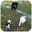 Photo 2 - Chihuahua Dog for adoption in Weeki Wachee, Florida - Tinker