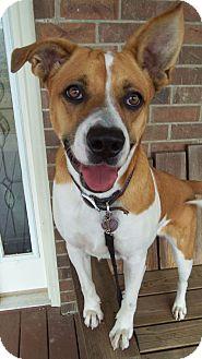 Blue Heeler Mix Dog for adoption in Conway, Arkansas - Charlotte