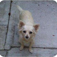 Adopt A Pet :: Lola - Inglewood, CA