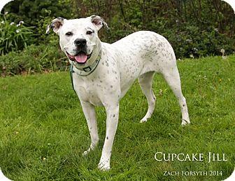 American Bulldog Mix Puppy for adoption in Portland, Oregon - Cupcake Jill