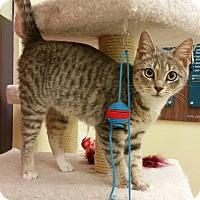 Adopt A Pet :: Jenkins - Phoenix, AZ