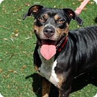Adopt A Pet :: Penny - Bradenton, FL