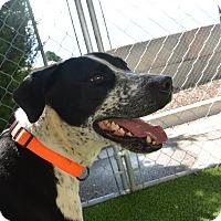 Adopt A Pet :: Clark - Meridian, ID
