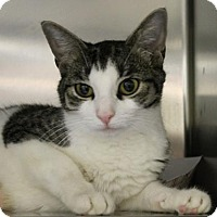 Adopt A Pet :: Uhura - Richmond, VA