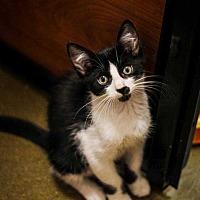 Adopt A Pet :: Grog - Woodstock, GA