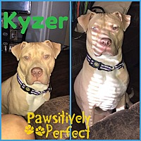 Adopt A Pet :: Kyzer in CT - East Hartford, CT