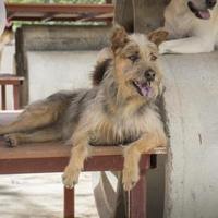 Adopt A Pet :: Spice - Fairfax Station, VA