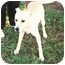 Photo 2 - Golden Retriever/Labrador Retriever Mix Dog for adoption in kennebunkport, Maine - Murphy-IN MAINE
