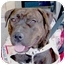 Photo 3 - American Pit Bull Terrier Dog for adoption in Las Vegas, Nevada - Frankie