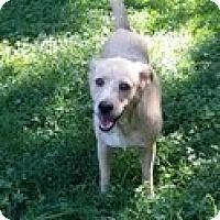 Adopt A Pet :: Mama Penny - Staunton, VA