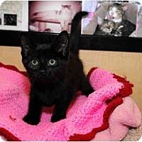 Adopt A Pet :: Dolly - Farmingdale, NY