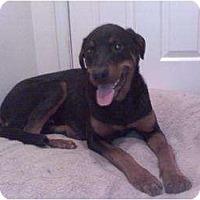 Adopt A Pet :: Thor - Fresno, CA