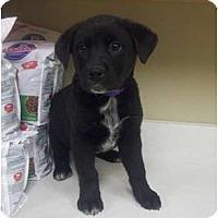 Adopt A Pet :: MASON - Southport, NC