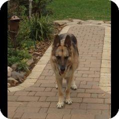 German Shepherd Dog Mix Dog for adoption in Houston, Texas - Micah