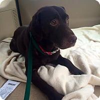 Adopt A Pet :: Chester - Cumming, GA