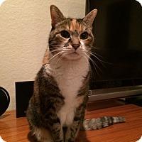 Adopt A Pet :: Nikki - Laguna Woods, CA