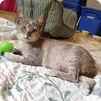 Adopt A Pet :: Star - Ocala, FL