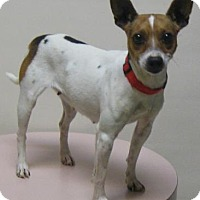 Adopt A Pet :: Sweet Pea - Gary, IN