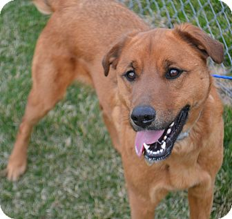 Shepherd (Unknown Type)/Labrador Retriever Mix Dog for adoption in Fruit Heights, Utah - Lucy
