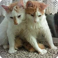 Adopt A Pet :: Whiskey and Frisky - Bear, DE