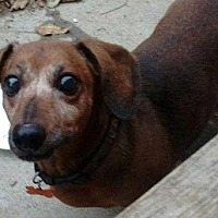 Adopt A Pet :: Rascal - Georgetown, KY