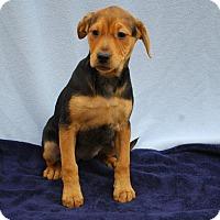 Adopt A Pet :: Merril - East Sparta, OH