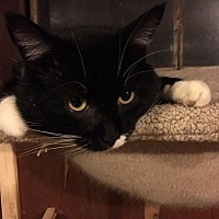 Adopt A Pet :: Bobby Magee - Delmont, PA