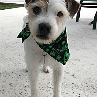 Adopt A Pet :: Elvis in Austin - Austin, TX