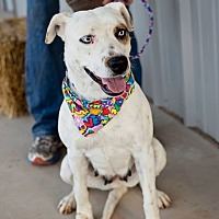 Adopt A Pet :: Mona - Hereford, TX