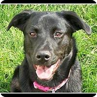 Adopt A Pet :: Oscar - Indian Trail, NC