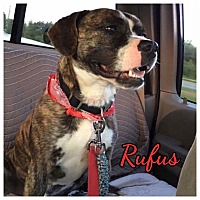 Adopt A Pet :: Rufus - High Point, NC