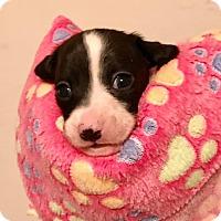 Adopt A Pet :: Rainy - North Brunswick, NJ