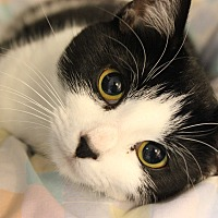Adopt A Pet :: Woodsie - New Richmond,, WI