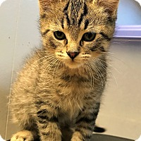 Adopt A Pet :: Fred - Toledo, OH