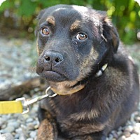 Adopt A Pet :: Lenny - Danbury, CT