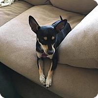 Adopt A Pet :: Duke - Manhattan, KS