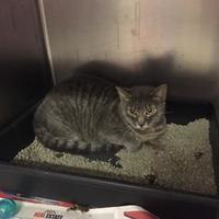 Adopt A Pet :: Molly - Myrtle Beach, SC